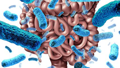 A Brief History Of Autism Research >> How The Gut Microbiome Could Provide A New Tool To Treat