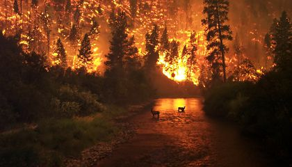 Study Shows 84% of Wildfires Caused by Humans