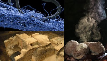 Cool Science Stories You May Have Missed in 2015