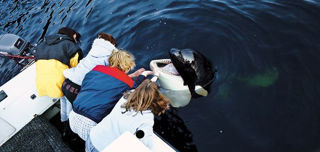 Petting Luna the killer whale