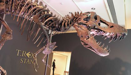 A T. Rex Sold for $31.8 Million, and Paleontologists Are Worried