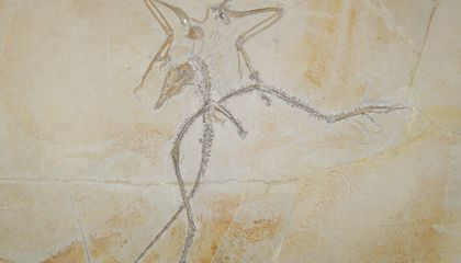 Taking a Closer Look at Archaeopteryx