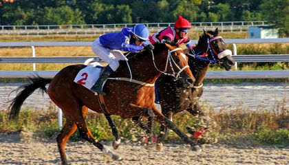Even Mild Cases of Asthma Can Slow Down Elite Racehorses