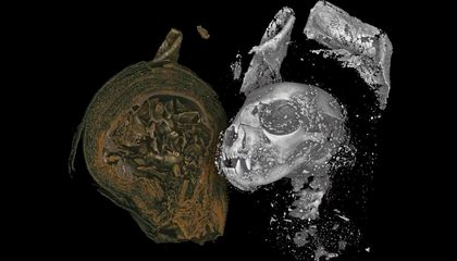 Scientists 'Digitally Unwrap' Ancient Egyptian Animal Mummies