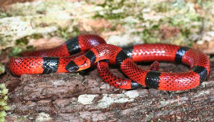 Decoding the Deadly Secret of Snake Venom