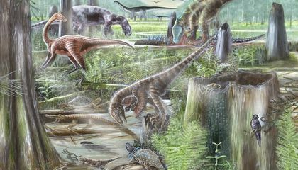 A New Study Shows How Evolution Was Driven by How Different Species Interacted