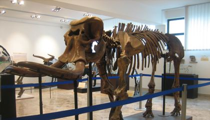 Ancient Elephants the Size of Shetland Ponies Once Roamed Sicily