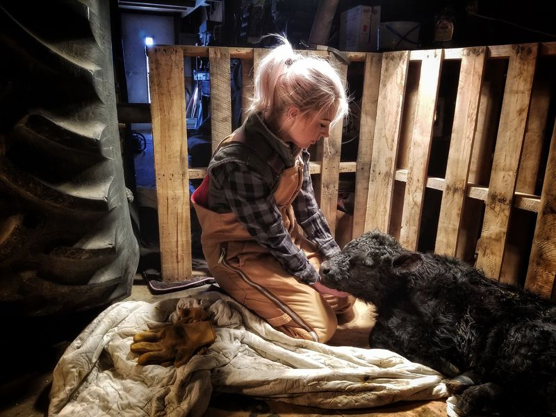 In her father's shop in Bushnell Nebraska, she watches over a newborn calf that had a difficult delivery.  The way she cradled his head with her hands was so tender and gentle.  It was obvious it came from a place of love.