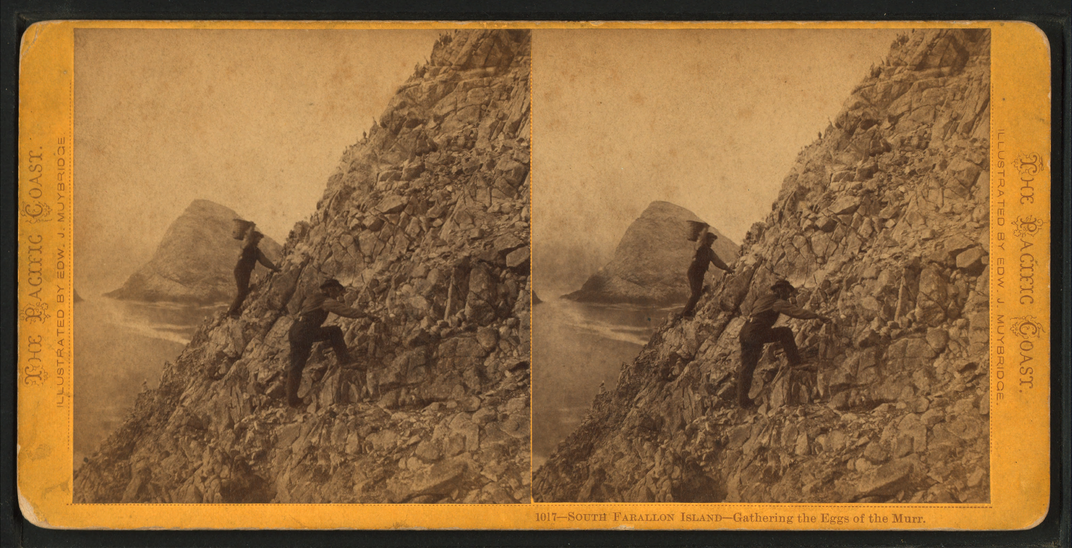 Farallon islands egg picker