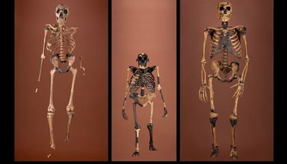 Sneak Peek into the Hall of Human Origins at the National Museum of Natural History