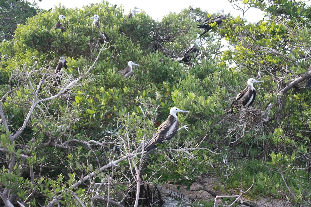 Birds sitting on top of trees.
