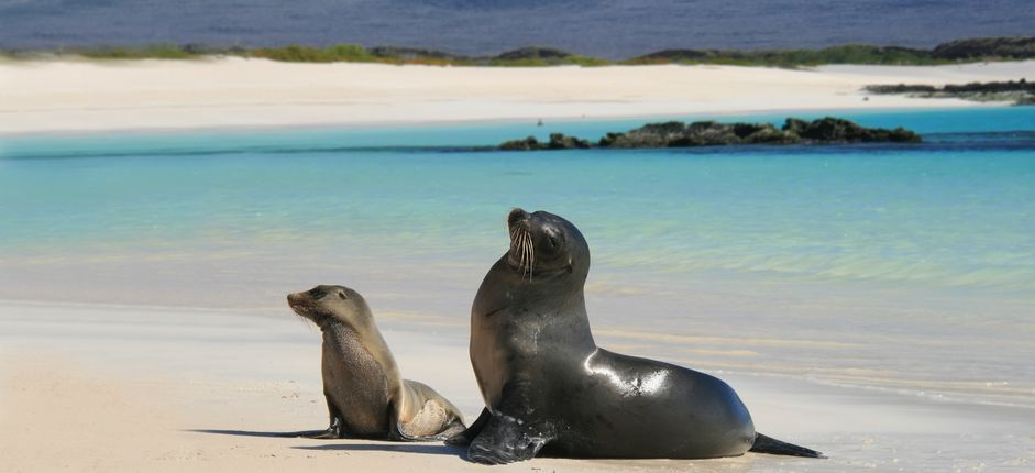 Wonders of the Galápagos Islands Voyage <p>Sail aboard the <i>Santa Cruz</i> <em>II </em>and discover every nature lover&#39;s dream come to life on the Gal&aacute;pagos Islands.</p>