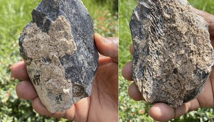 1.4-Million-Year-Old Ax Made of Hippo Bone Found in Ethiopia
