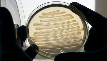 Genetically Modified E. Coli Bacteria Can Now Synthesize Diesel Fuel