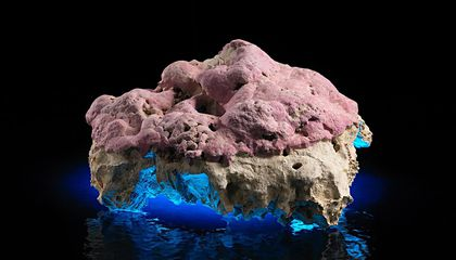 In Its Layers, This Stunning Pink Coralline Algae Holds Secrets of Climates Past
