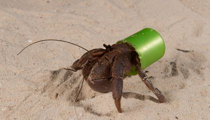 Meet a Hermit Crab Who Has Shacked Up in a Lego