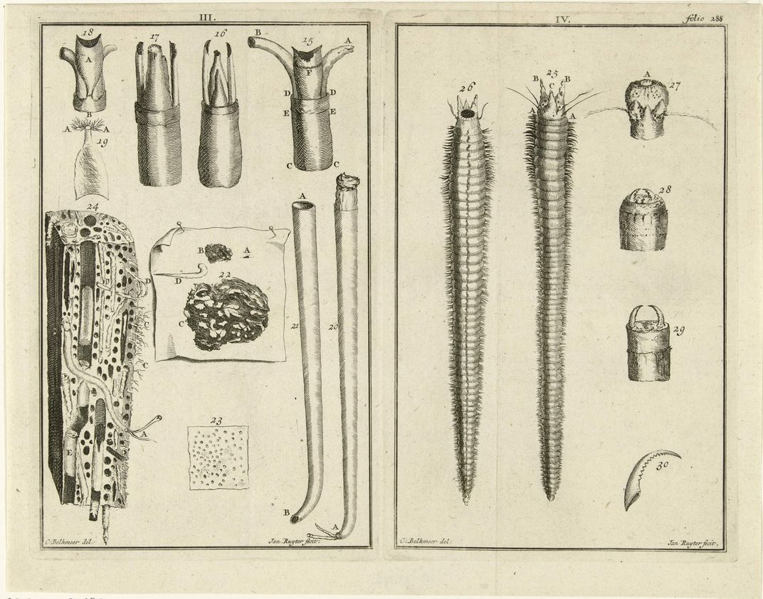 worms-etching-shipworms.jpg