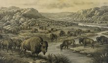 The Bison Returns to the Great American Plains