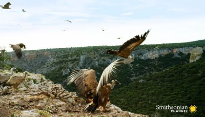 Griffon Vultures Depend on the Sun to Fly. Why?