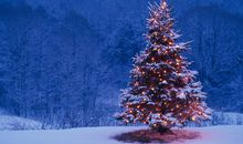 It Can Take More Than 10 Years of Work to Get a Christmas Tree Ready for Market