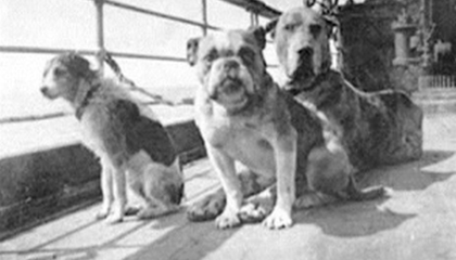 The Definitive Guide to the Dogs on the Titanic