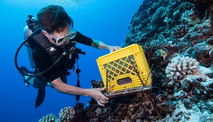 Chris Meyer, a marine invertebrate zoologist at the Smithsonian's National Museum of Natural History, dives around French Polynesia with equipment used to track coral reef health. (Jenny Adler)