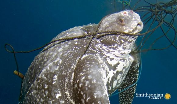 Preview thumbnail for video'Scientists Go on a Mission to Save Sea Turtles
