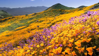 Image: Southern California will soon see another booming superbloom