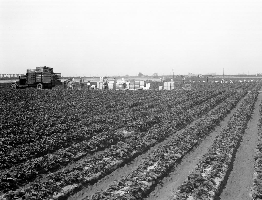 In the 1930s, Orange County was starting to transition from a land of orange groves and strawberry fields.