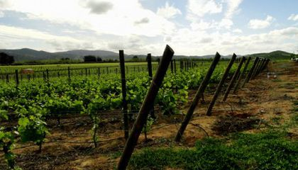 Chile Earthquake Strikes a Blow to Wine Industry