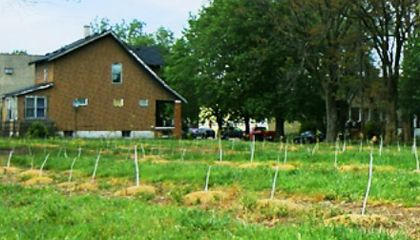 Can Planting Gardens and Orchards Really Save Dying Cities?