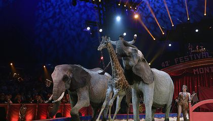 After Claims of Animal Cruelty, Can the Circus Survive?