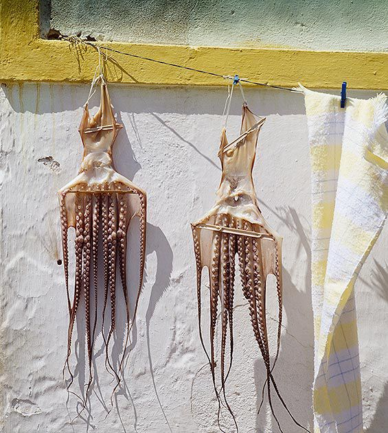 Squids in Algarve Portugal