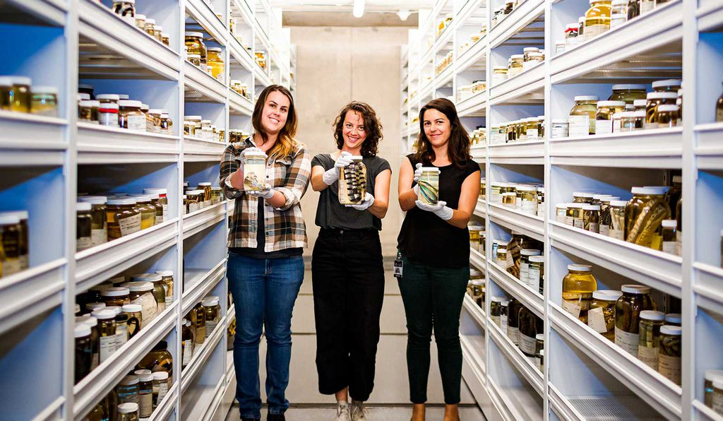 Herpetologists (left to right: Erica Ely, Lauren Scheinberg and Dr. Rayna Bell) hold specimens from the California Academy of Sciences collection.