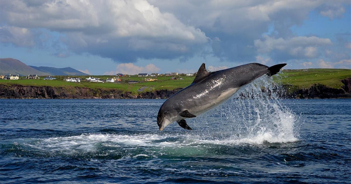 A Dolphin Has Been Living Solo in This Irish Harbor for Decades