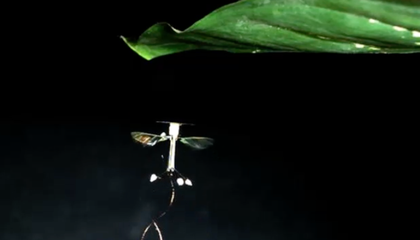 Tiny Drones Use Static Cling to Perch