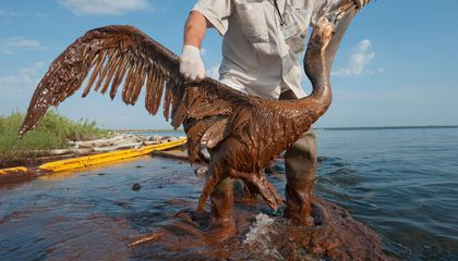 The Gulf Oil Spill Isn't Really Over, Even Five Years Later