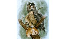 This Giant Prehistoric Owl Was an Actual Cannibal