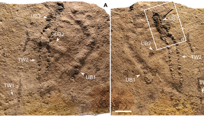 Oldest Footprints Show When Life On Earth Got Legs