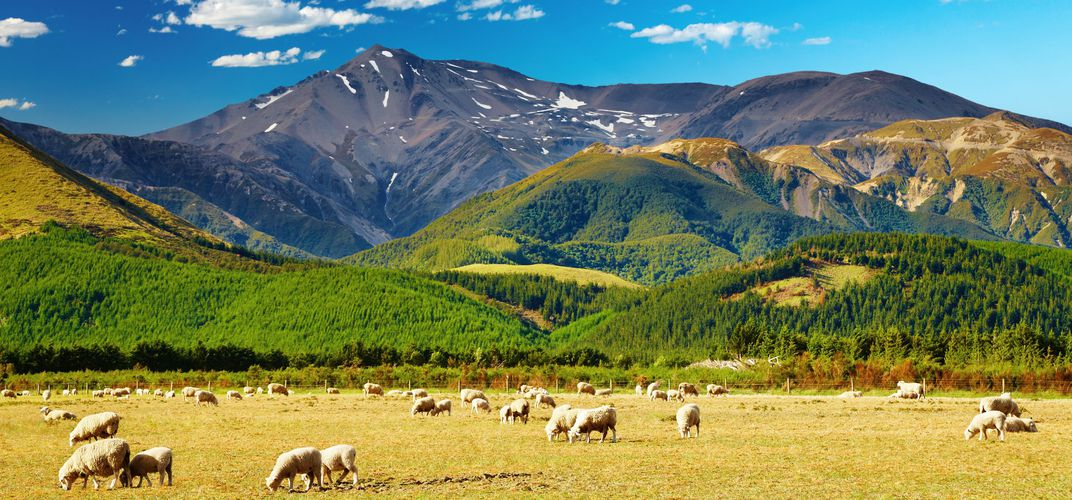 Typical New Zealand landscape with sheep farm