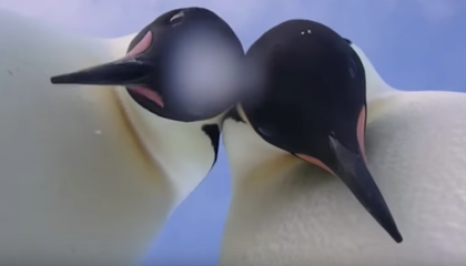 Two Antarctic Penguins Took an Adorable 'Selfie'