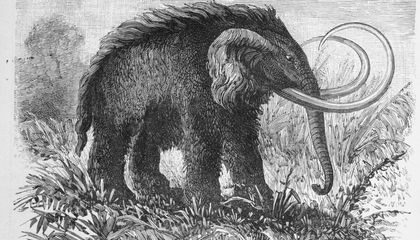Solving a Mystery of Mammoth Proportions