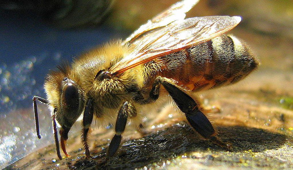 Like most animals, bees need ample hydration to survive. Draw them to you by installing water features in your garden.