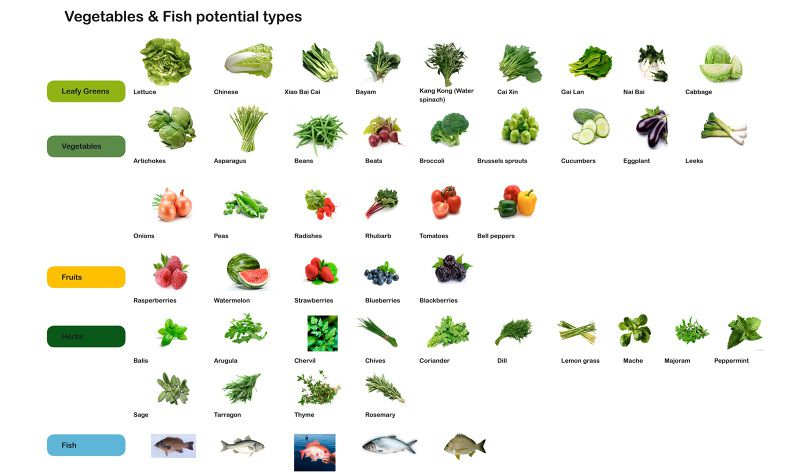 SFF_VEGETABLES_FISH_FTA_800.jpg