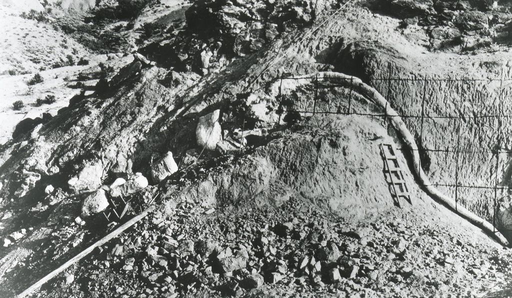In 1923, Charles Whitney Gilmore and his crew spent almost eight years on the recovery of the <em>Diplodocus</em> skeleton from a steep cliff of hard sandstone.