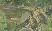 First-Ever Fossilized Mother Bird Found With Unlaid Egg