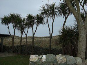 20110520102412irishpalms-300x225.jpg