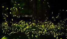 How Firefly Studies Might Spark Robotic Advances