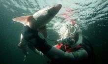 Stopping Sharks by Blasting Their Senses