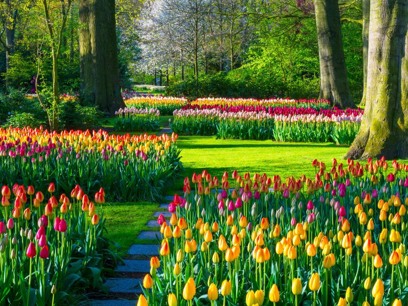The Keukenhof Floral Park in Lisse, The Netherlands.